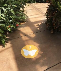 Butterfly Wonderland floor graphic directional signage, printed by Artisan Colour, Scottsdale Commercial Printing Company and AMA Phoenix Sponsor